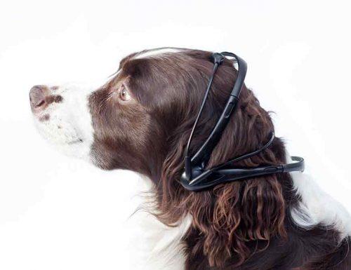 Cani parlanti